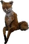 What the Fox 100x150